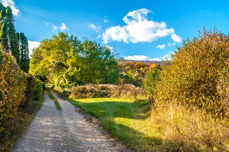 Sparse begining forest path, autumn, November, Slovakia