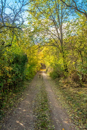 Sparse begining of forest in early autumn, Bratislava, Slovakia