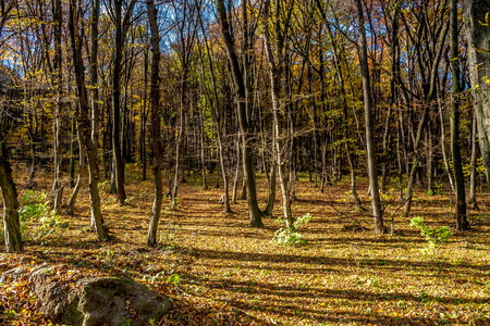 Flat part in deep forest hill covered by fallen colorful foliage, Bratislava, Slovakia Stock Photo