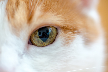 Close up of yellow wide open eye and straight looking ginger cat Stock Photo
