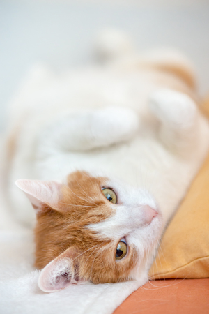 Tired ginger cat rest on bed with wide pinched eyes, observing