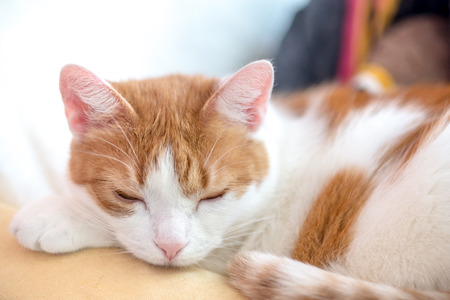 Cute ginger kitty rest on counch with pinched eyes
