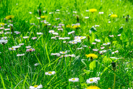 Grass field full of herbs and wild flowers Stock Photo - 83068873