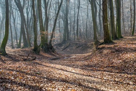 Old stream trough in forest in late february (winter) with fog, sun beams and long tree shadows Stock Photo