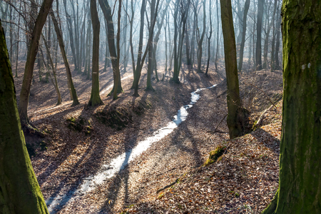 Frozen stream in huge trough in forest in late february (winter) with fog, sun beams and long tree shadows