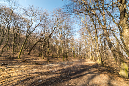 Wide forest road in middle of trees, at late february in winter weather Stock Photo - 83234978