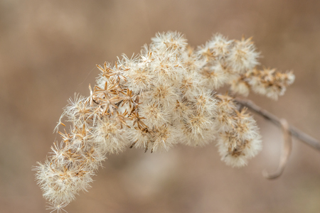 Soft dry branch of fluffy flowers after winter at early spring