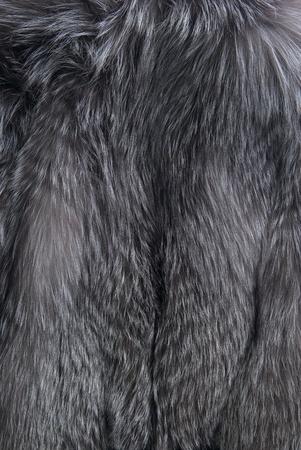 silver fox: Fondo con piel de zorro gris plata