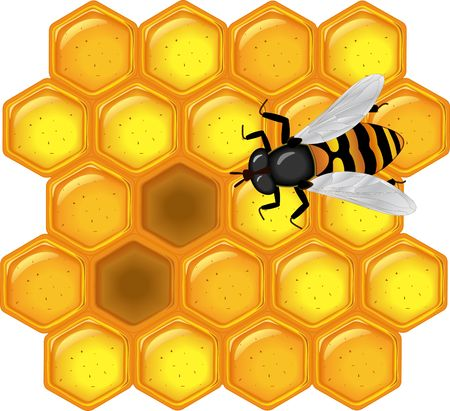 honeyed: a glossy vector illustration of golden honeycomb with bee Stock Photo