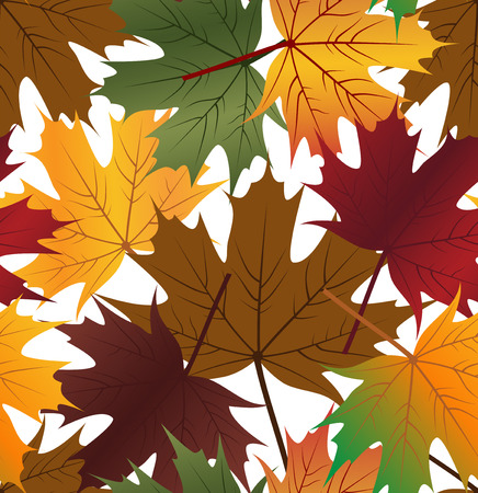 Seamless leaf pattern with maple leaf on white background Vector