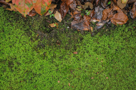 dead leaf: Moss and dead leaf in the rain