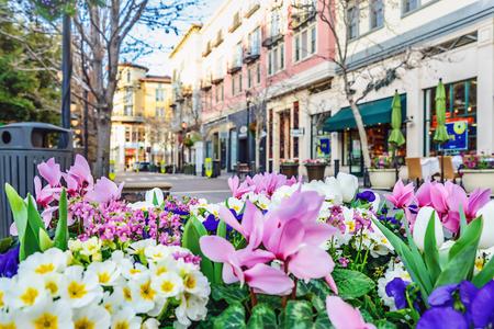 Landschap van het bloembed in de straat; San Jose, Californië Stockfoto