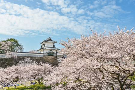 Spring scenery of Kanazawa Castle 新聞圖片