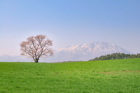 Scenery of the a cherry tree in the grassy plain Stock Photo