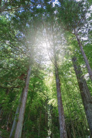 come in: Sunlight to come in in the forest Stock Photo