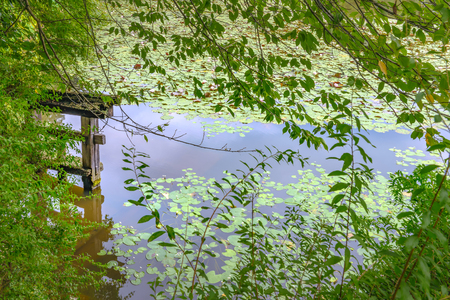 waterweed: Scenery of the lotus pond and temple