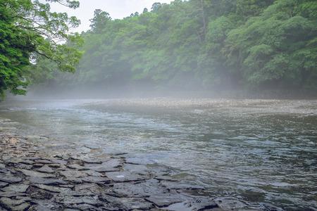 朝の霧で五十鈴川の川の風景