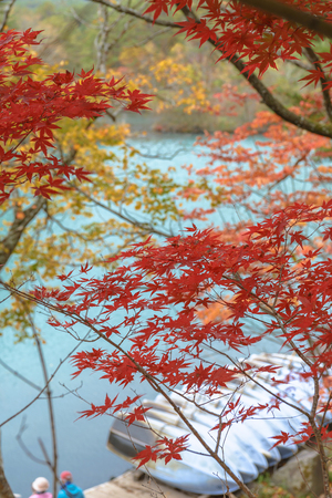 lake shore: Autumn scenery of the lake shore