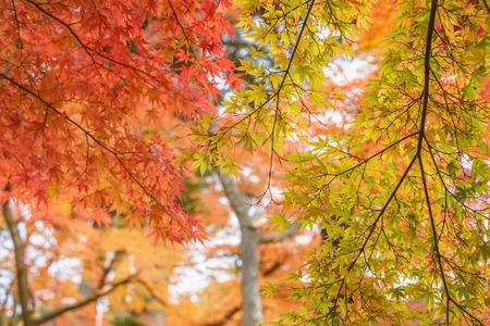 autumn colour: Beautiful autumn colour leaves Stock Photo