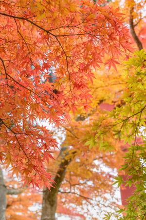 scenic spots: Beautiful autumn colour leaves Stock Photo