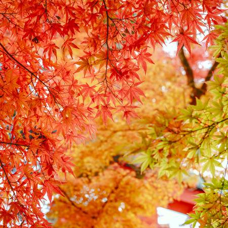 Beautiful autumn colour leaves Stock Photo