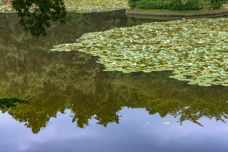 waterweed: Scenery of the lotus pond in Kyoto
