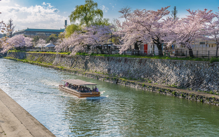Scenery of cherry blossoms in Kyoto Stock Photo