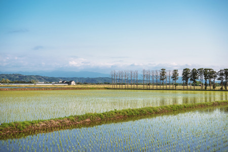 Spring scenery of the rice field and mount Hakusan