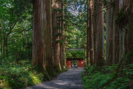 The Shinto gate of the Togakushi jinja shrine in forest