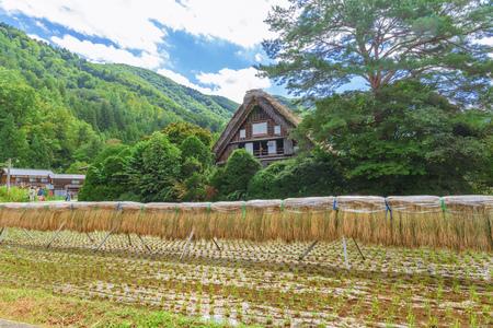 Rural scenery of the Shirakawago in Japan