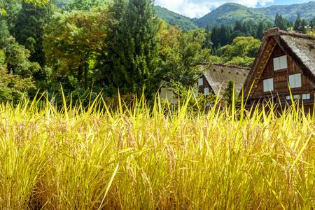 Autumn scenery of the World Heritage site Shirakawago in Japan