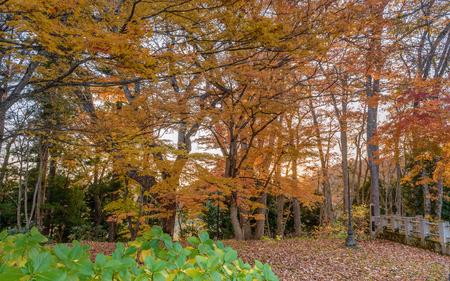 Autumn scenery of the garden Stok Fotoğraf