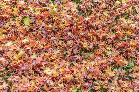 Fallen leaves in the forest