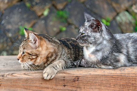 Homeless cats of the park in Onomichi city, Japan