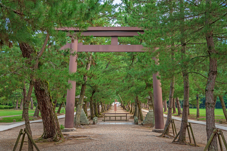 Approach to Izumo Taisha of the row of pine trees 写真素材