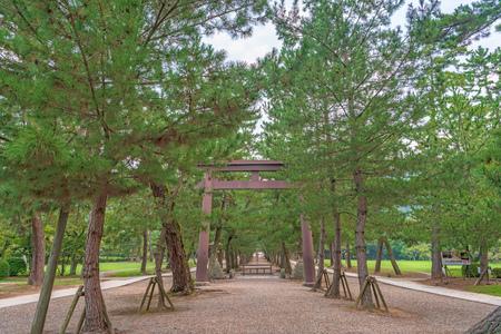 Approach to Izumo Taisha of the row of pine trees 写真素材