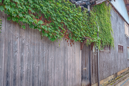 Ivy of the wooden wall in Japan