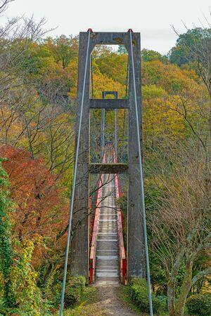 Suspension bridge in the autumn forest