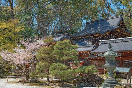 Spring scenery of the Imamiya Jinja Shrine in Kyoto, Japan