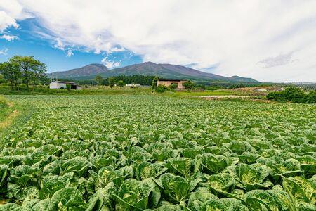 Monte Asama y parche de repollo en Karuizawa, Japón Foto de archivo