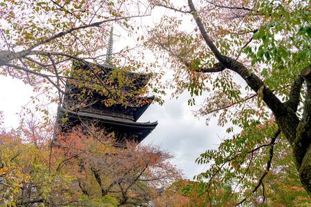 Autumn scenery fo the To-ji temple in Kyoto, Japan