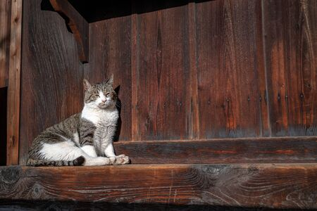 The cat which basks in the sun at the Temple in Kyoto, Japan