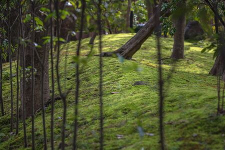 The garden which is mossed of the Kamigamo Shrine in Kyoto, Japan 写真素材
