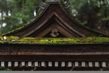 Mossy shrine in the rain