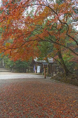 Autumn shrine approach