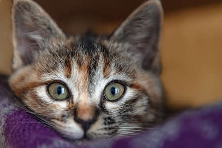 The cute kitten which relaxes