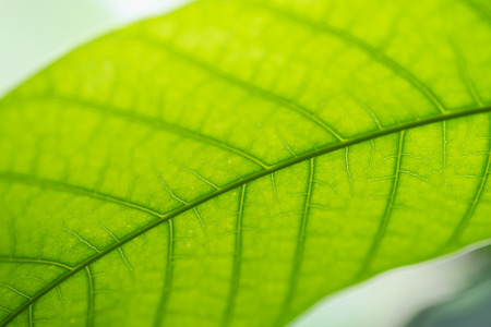 Close up nature view of green leaf under sun light. Natural green plants landscape using as a background or wallpaper. Stock Photo
