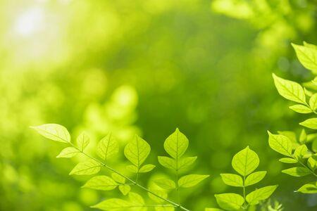 Nahaufnahme des grünen Blattes der Naturansicht auf unscharfem grünem Hintergrund unter Sonnenlicht mit Bokeh und Kopienraum unter Verwendung der natürlichen Pflanzenlandschaft als Hintergrund, Ökologietapetenkonzept.