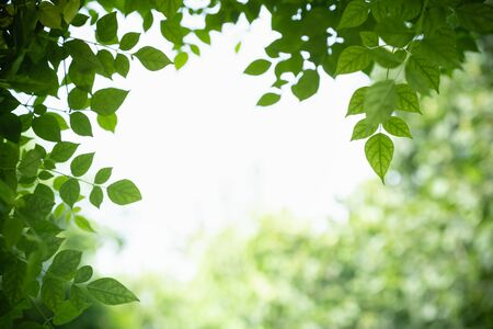 Close up of nature view green Millingtonia hortensis leaf on blurred greenery background with bokeh and copy space using as background natural plants landscape, ecology wallpaper concept. Banco de Imagens