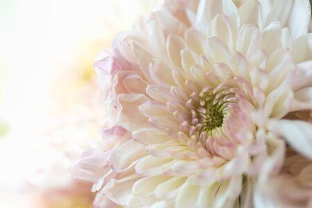 Nahaufnahme der schönen orange-rosa gelben Dahlie-Blume mit Kopienraum für Text, der als Hintergrund natürliche Pflanzenlandschaft, Ökologie-Tapetenkonzept verwendet. Standard-Bild